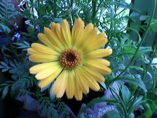 Жёлтый цветочек. Блиц: желтые цветы