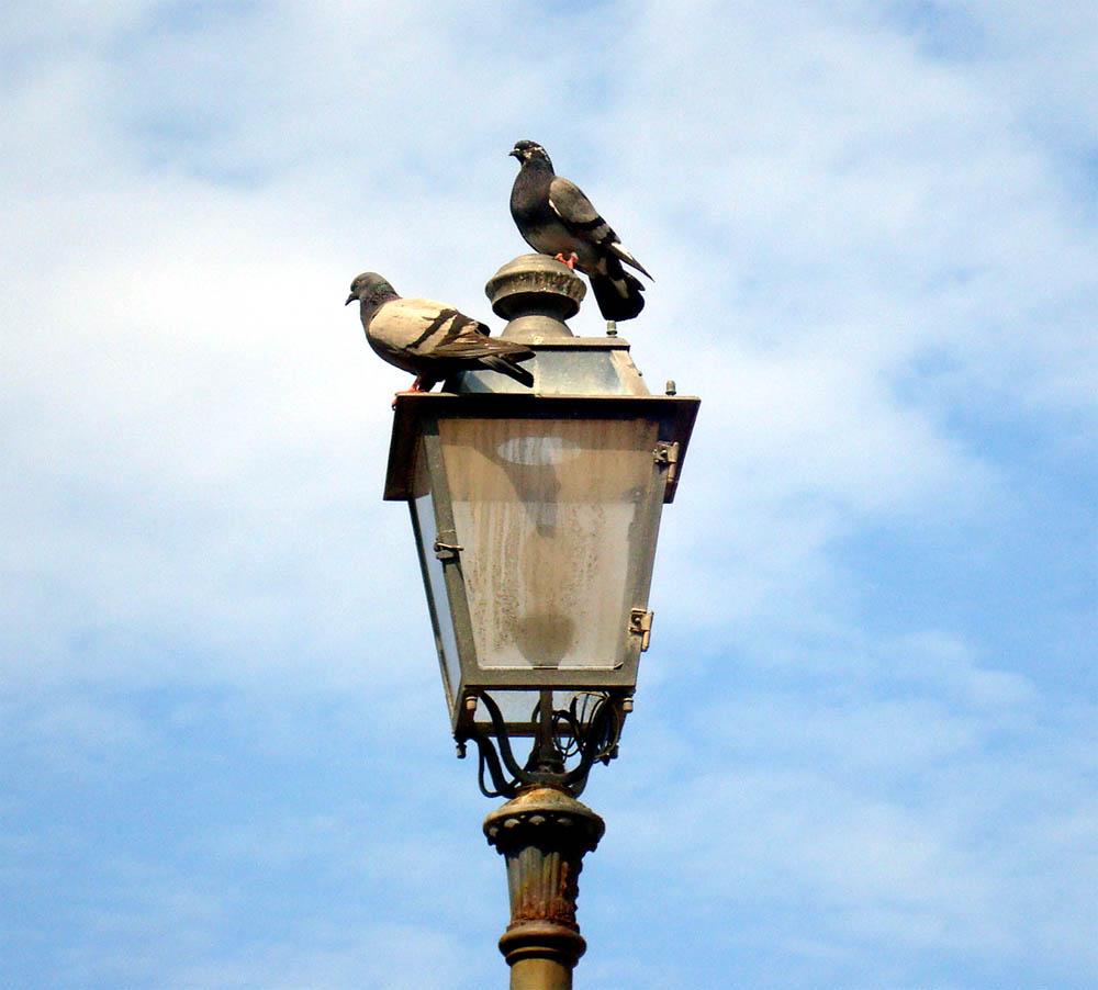 Всё выше и выше.... Блиц: птички
