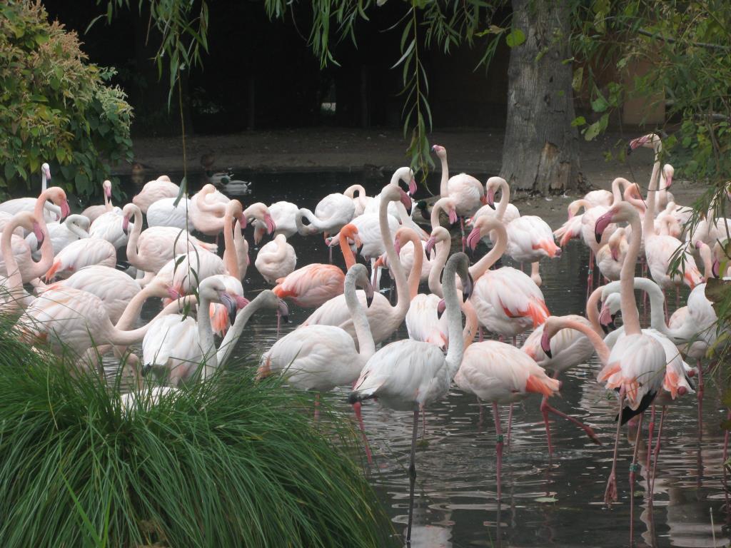 Розовые фламинго. Блиц: птички