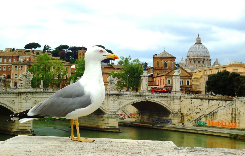 Пернатый итальянец. Блиц: птички