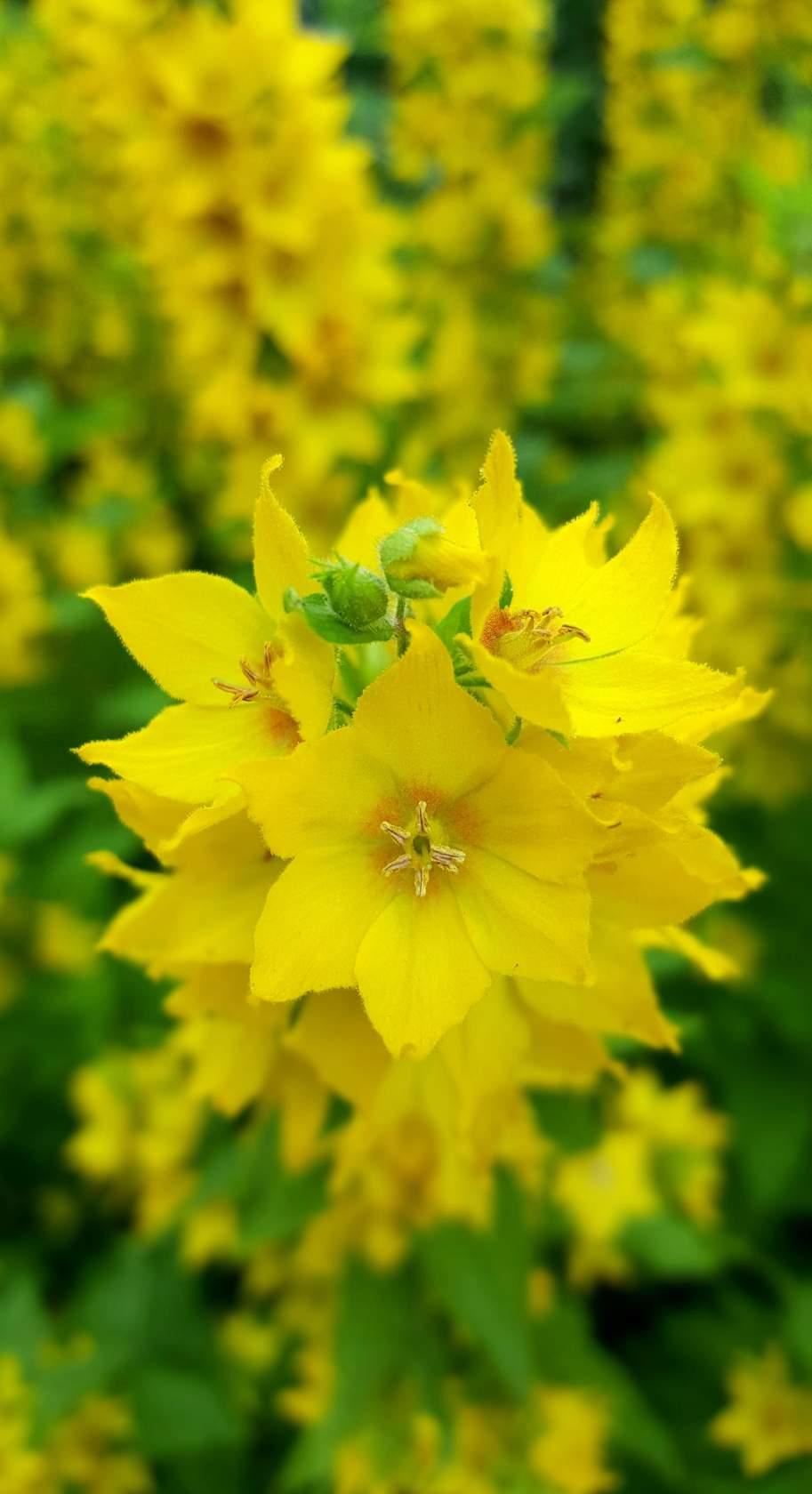 Собачки. Блиц: желтые цветы