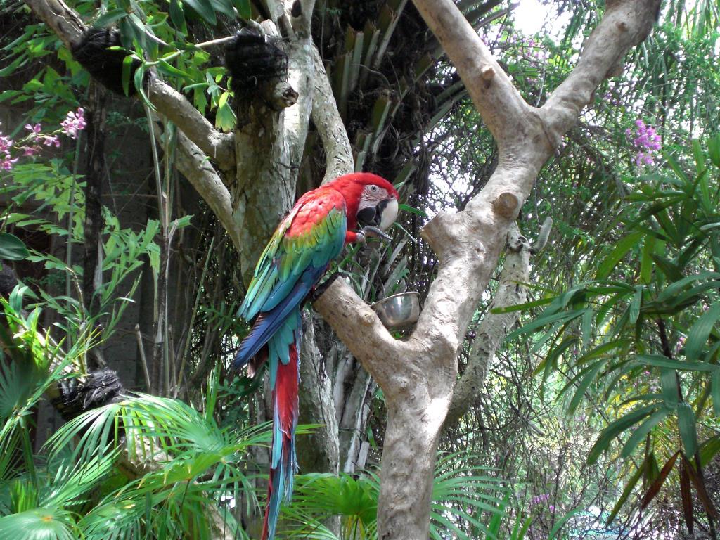 Попугаи о.Бали. Блиц: птички