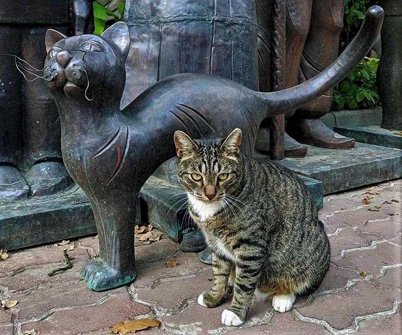 лучше кошки зверя нет. Блиц: скульптура