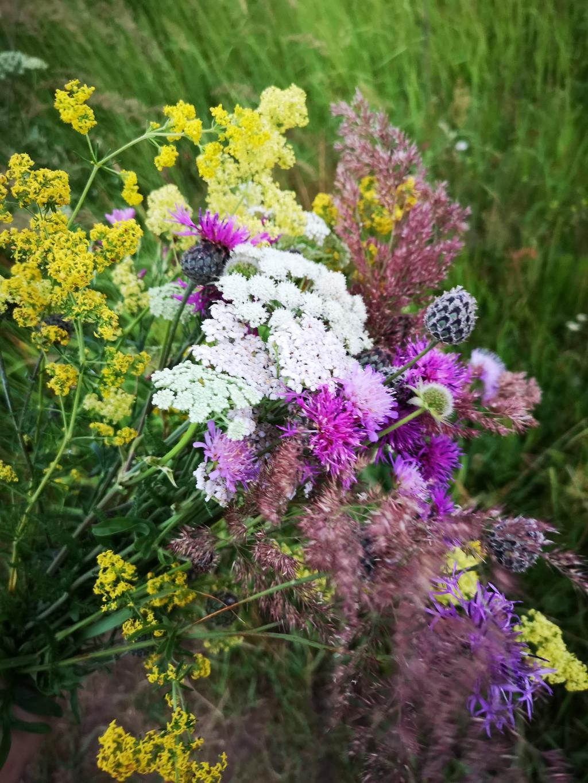 Цветы родного края. Блиц: полевые цветы