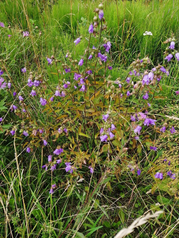 Цветы в поле. Блиц: полевые цветы