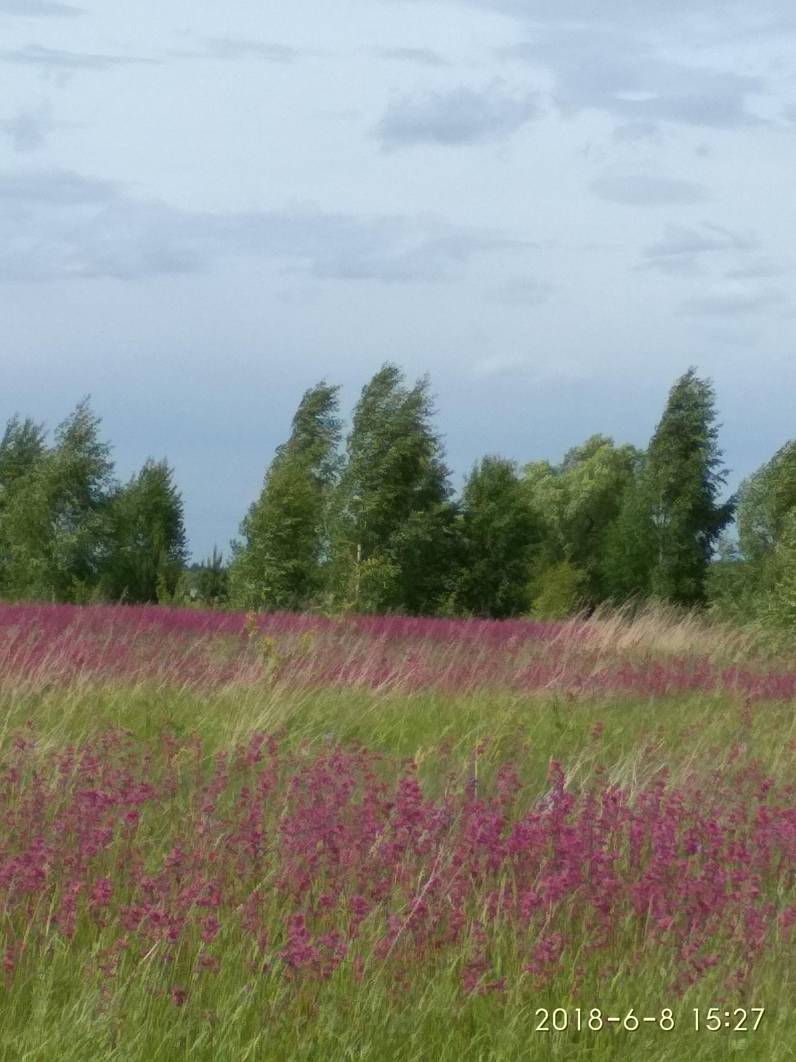 Летний день. Блиц: полевые цветы