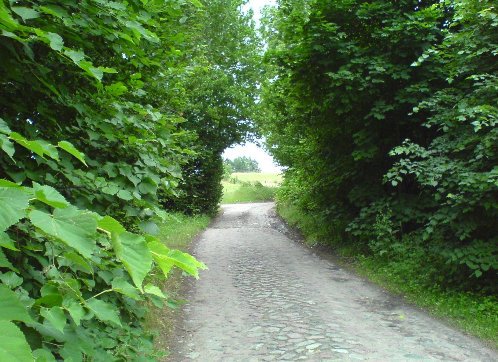 Лесной тоннель. Лесной пейзаж