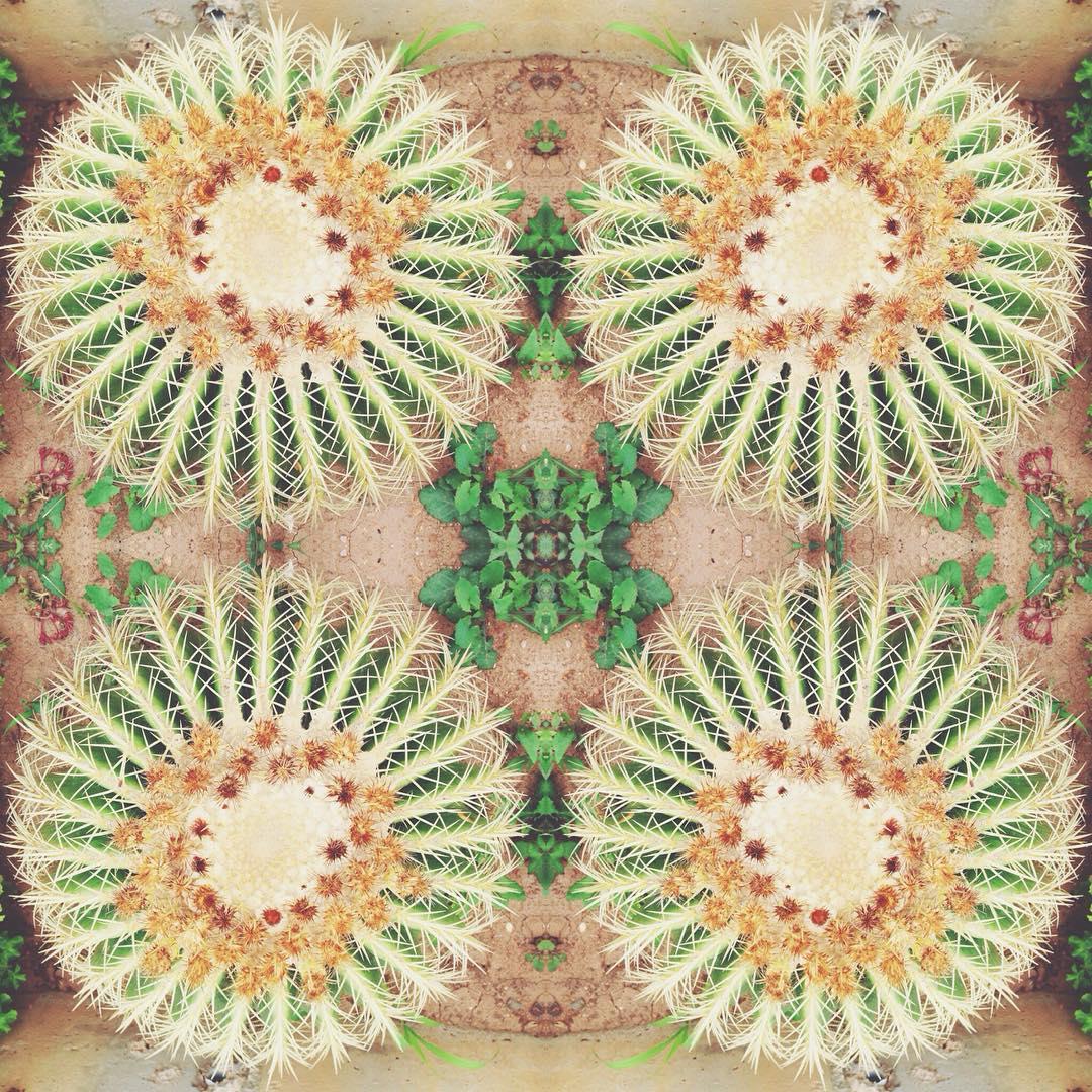 Калейдоскоп. Блиц: кактусы