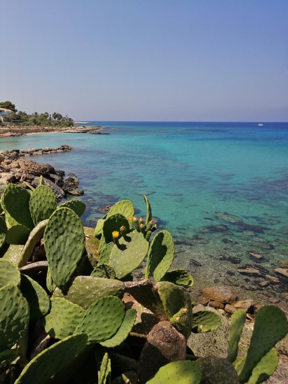 Кактус, Кипр. Блиц: кактусы