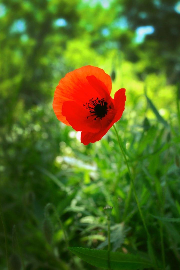 Гордый. Блиц: полевые цветы