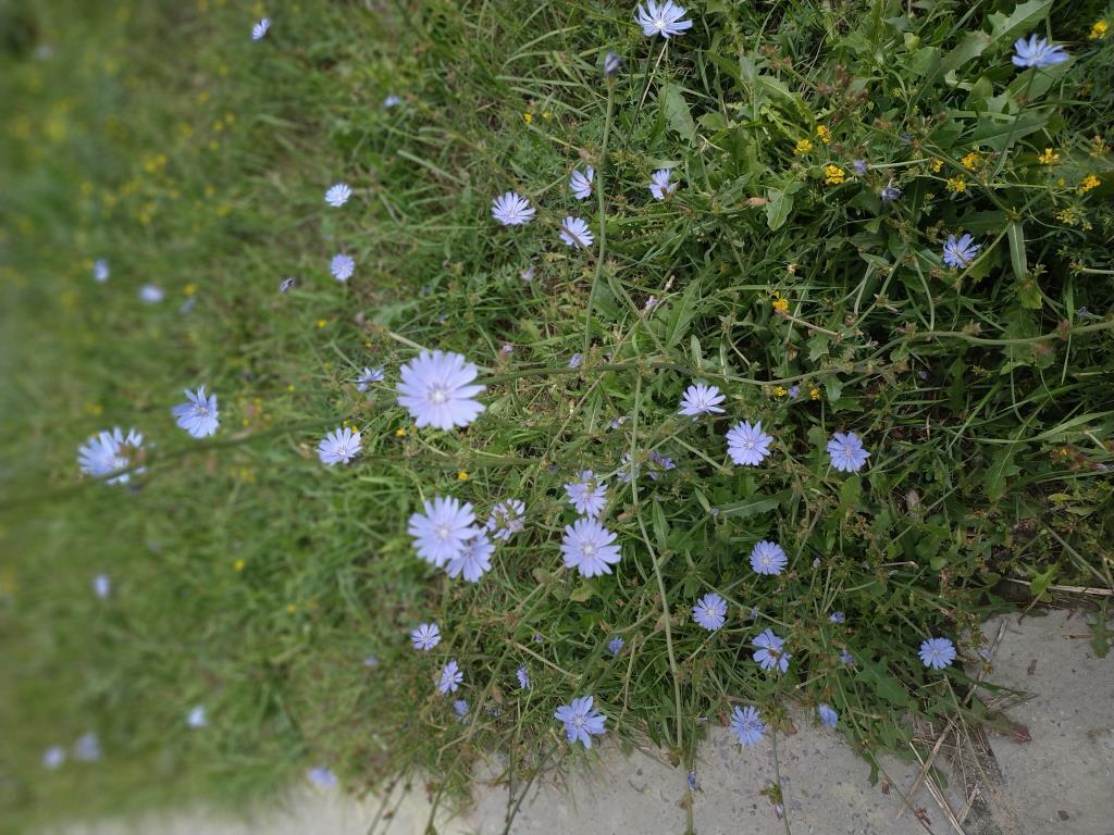 Полевые гвоздички. Блиц: полевые цветы