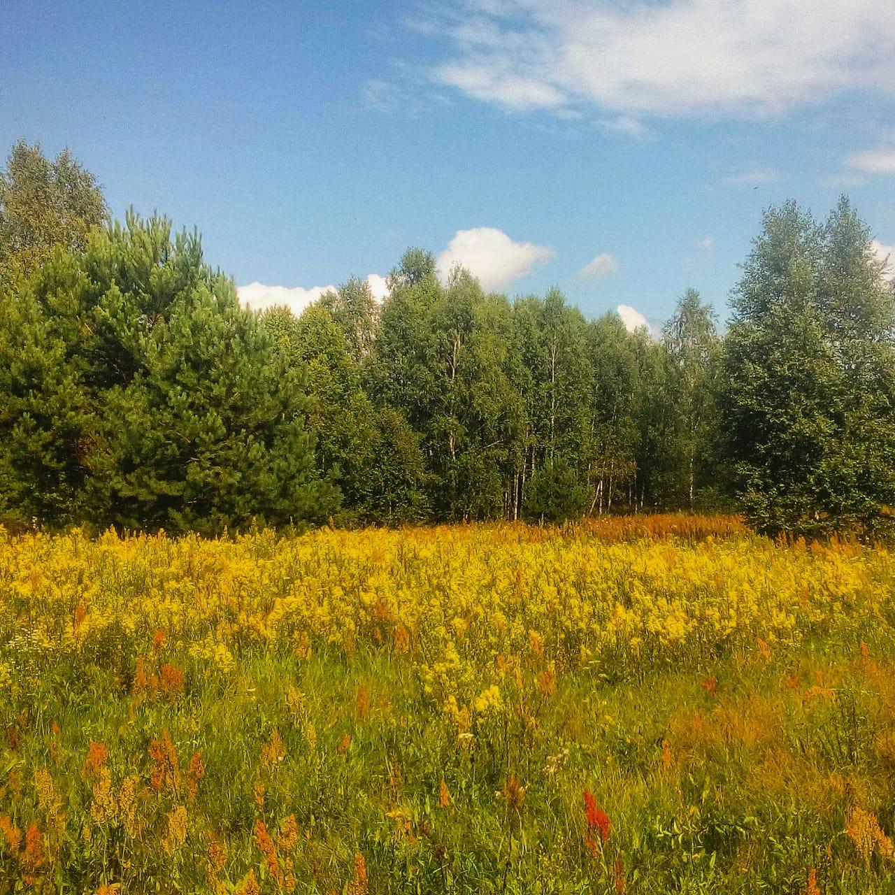 Успей поймать мгновение лета!. Блиц: полевые цветы