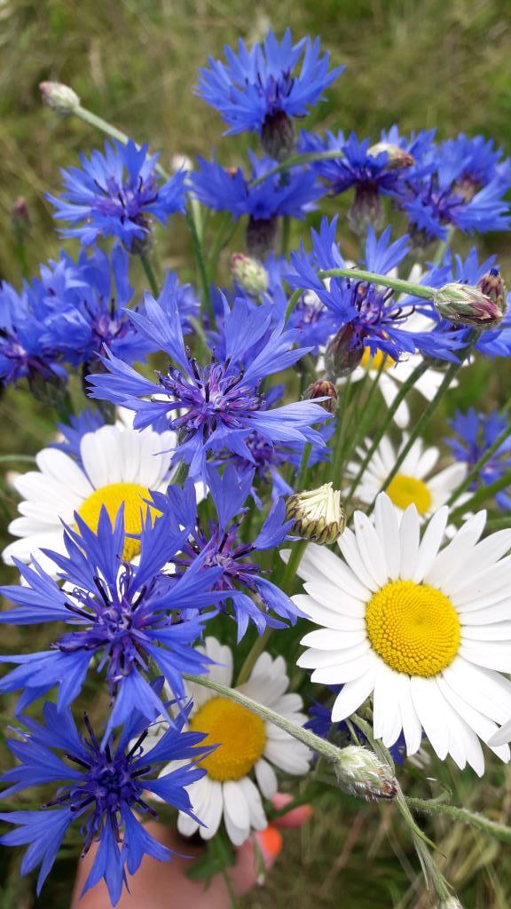 Букет из любимых цветов. Блиц: полевые цветы
