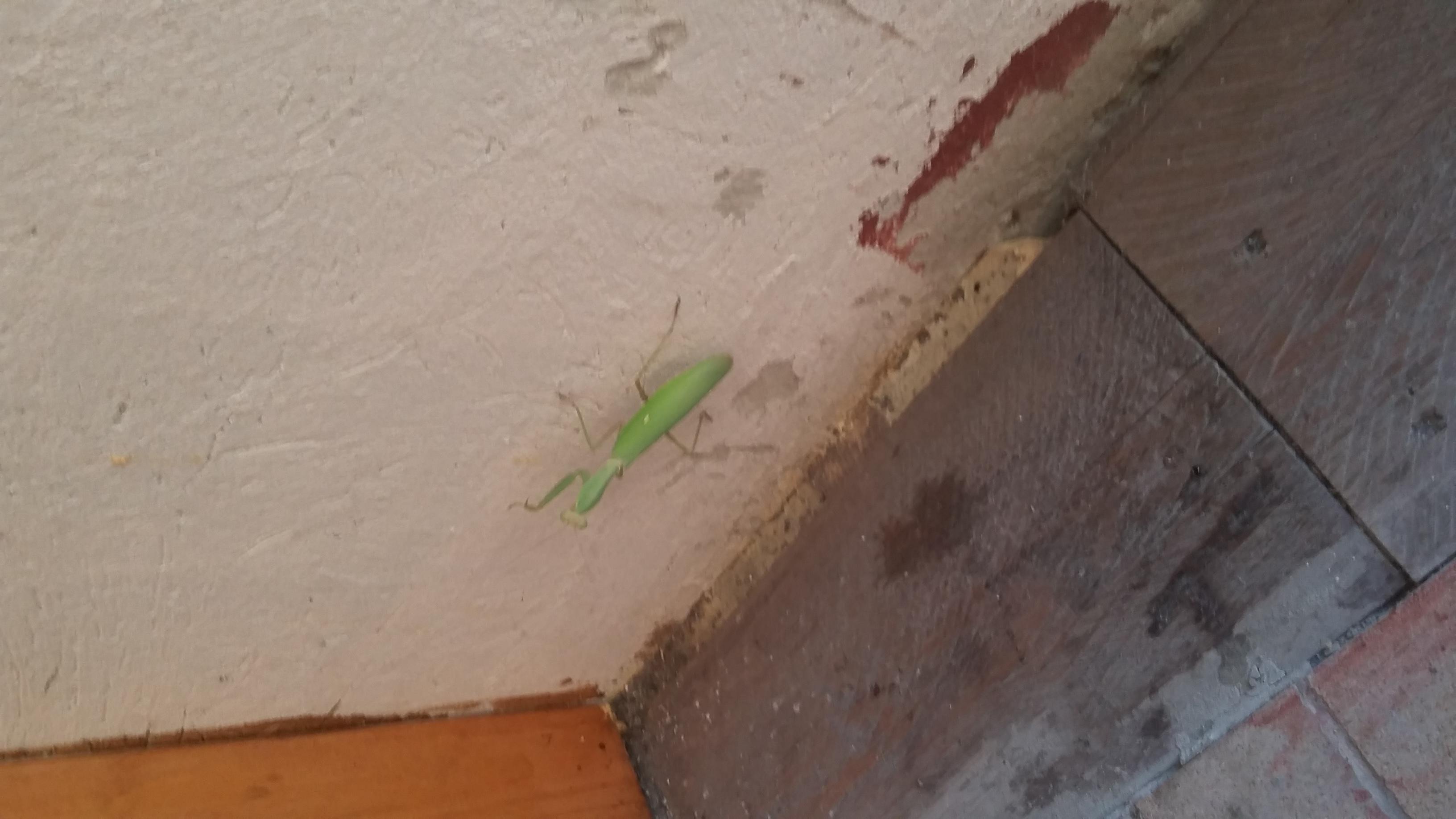 Богомол. Блиц: жизнь насекомых