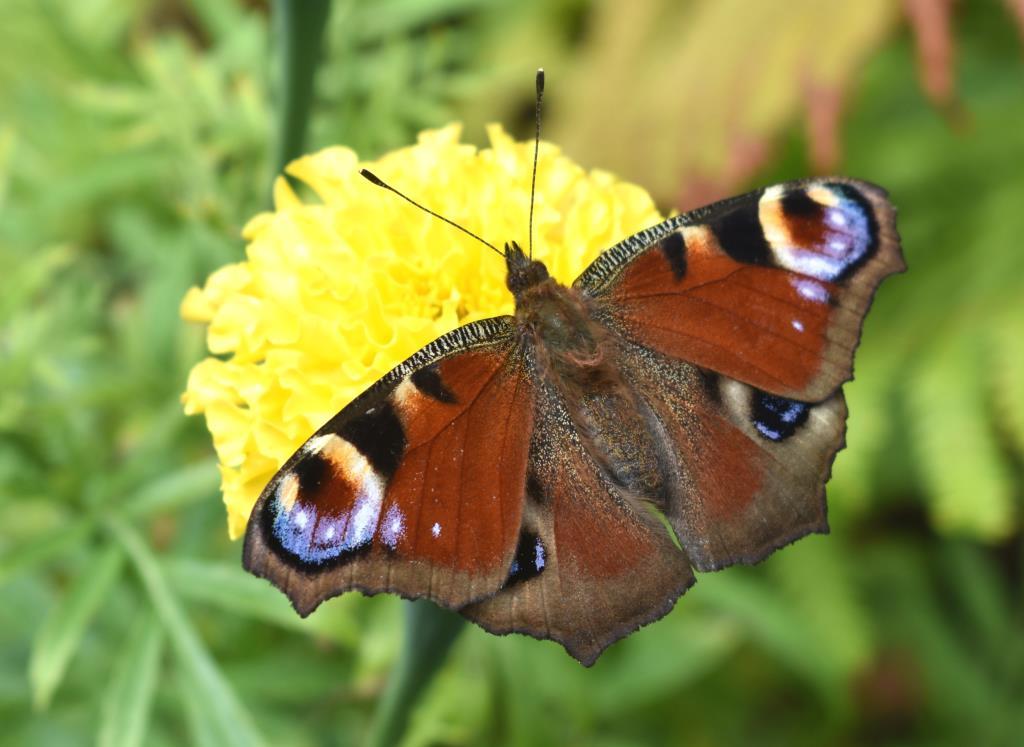 Крылатая фотомодель. Блиц: жизнь насекомых