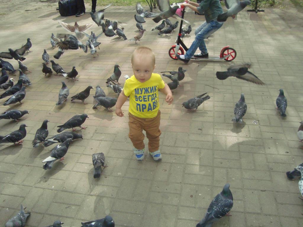 Кормим голубей. Яркое лето