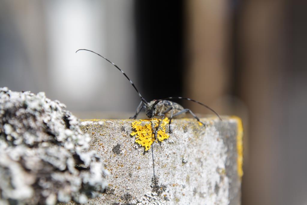 Усач. Блиц: жизнь насекомых