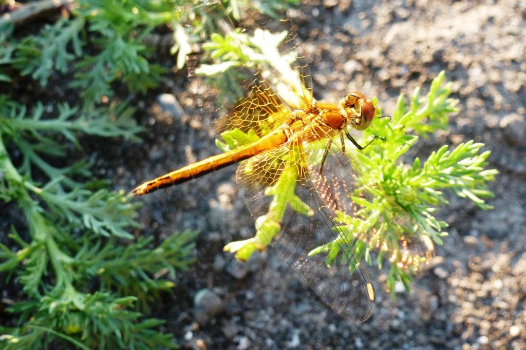 Попрыгунья стрекоза лето красное пропела.... Блиц: жизнь насекомых
