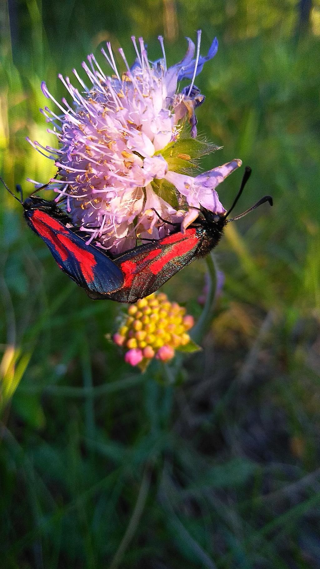 Красавицы бабочки. Блиц: жизнь насекомых