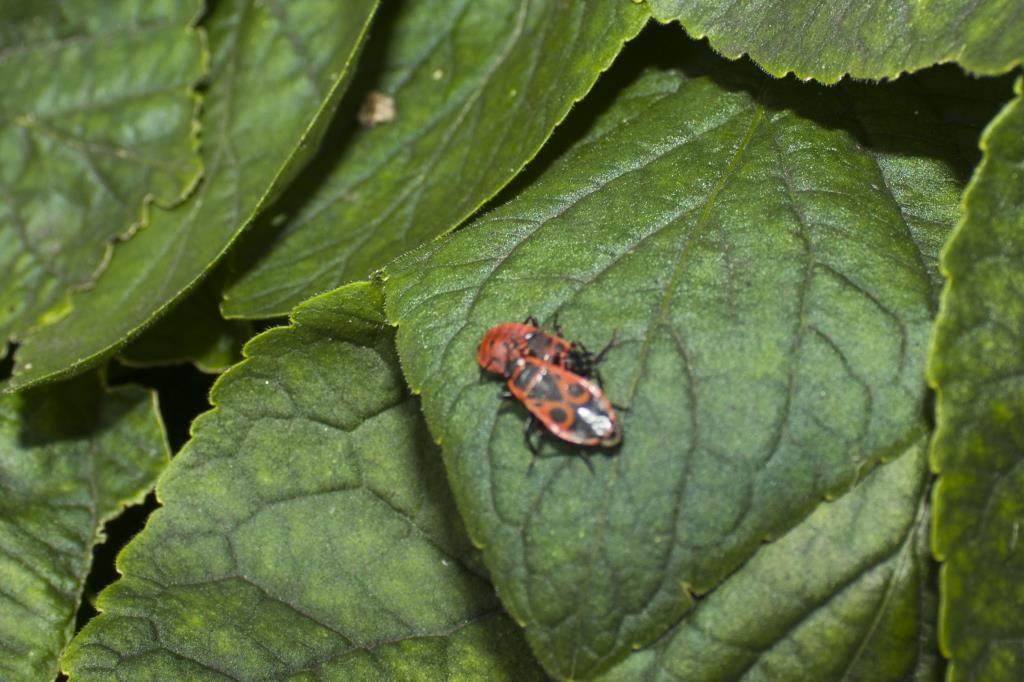 Жу-жу-жу. Блиц: жизнь насекомых