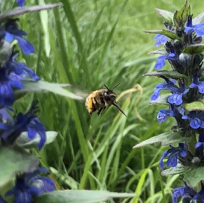 Пчелка. Блиц: жизнь насекомых