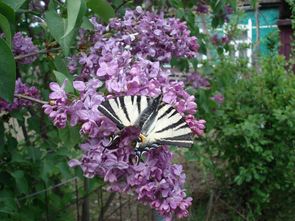 Бабочка красавица. Блиц: жизнь насекомых