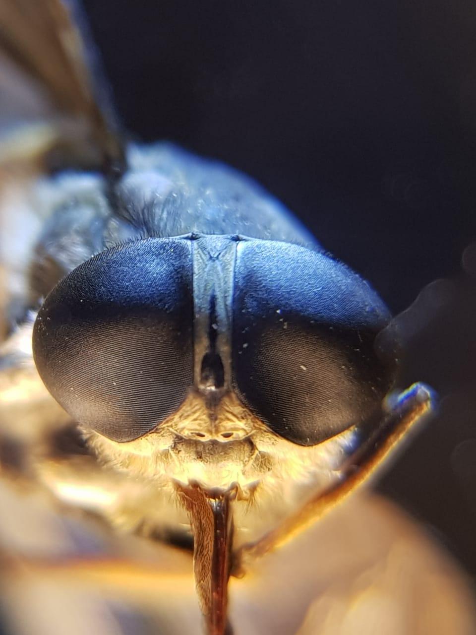 Авиаторы) . Блиц: жизнь насекомых