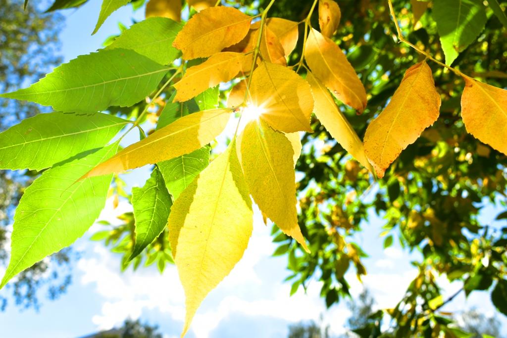 Осенний лучик. Блиц: яркая осень