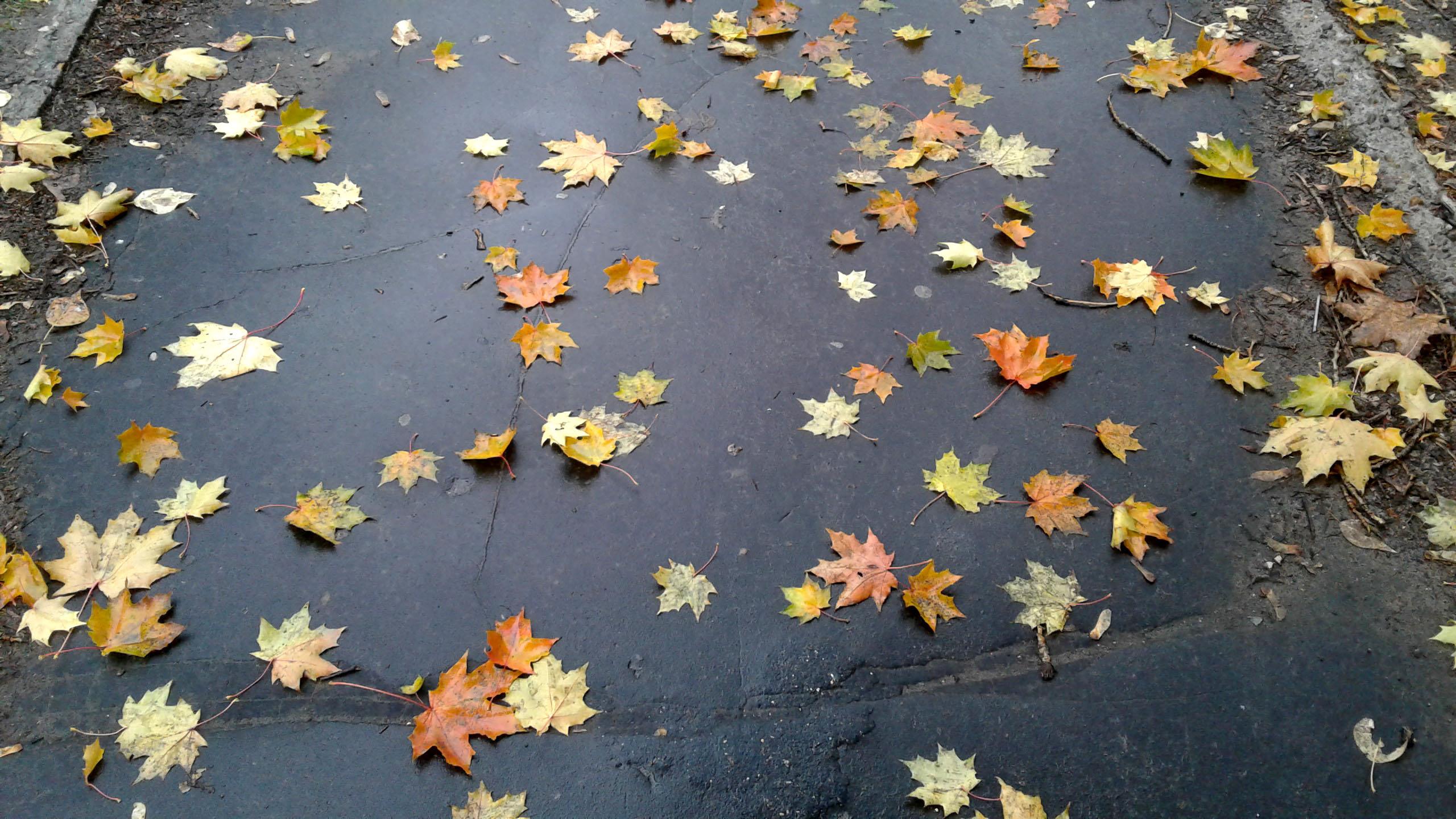 Осень под ногами. Блиц: яркая осень
