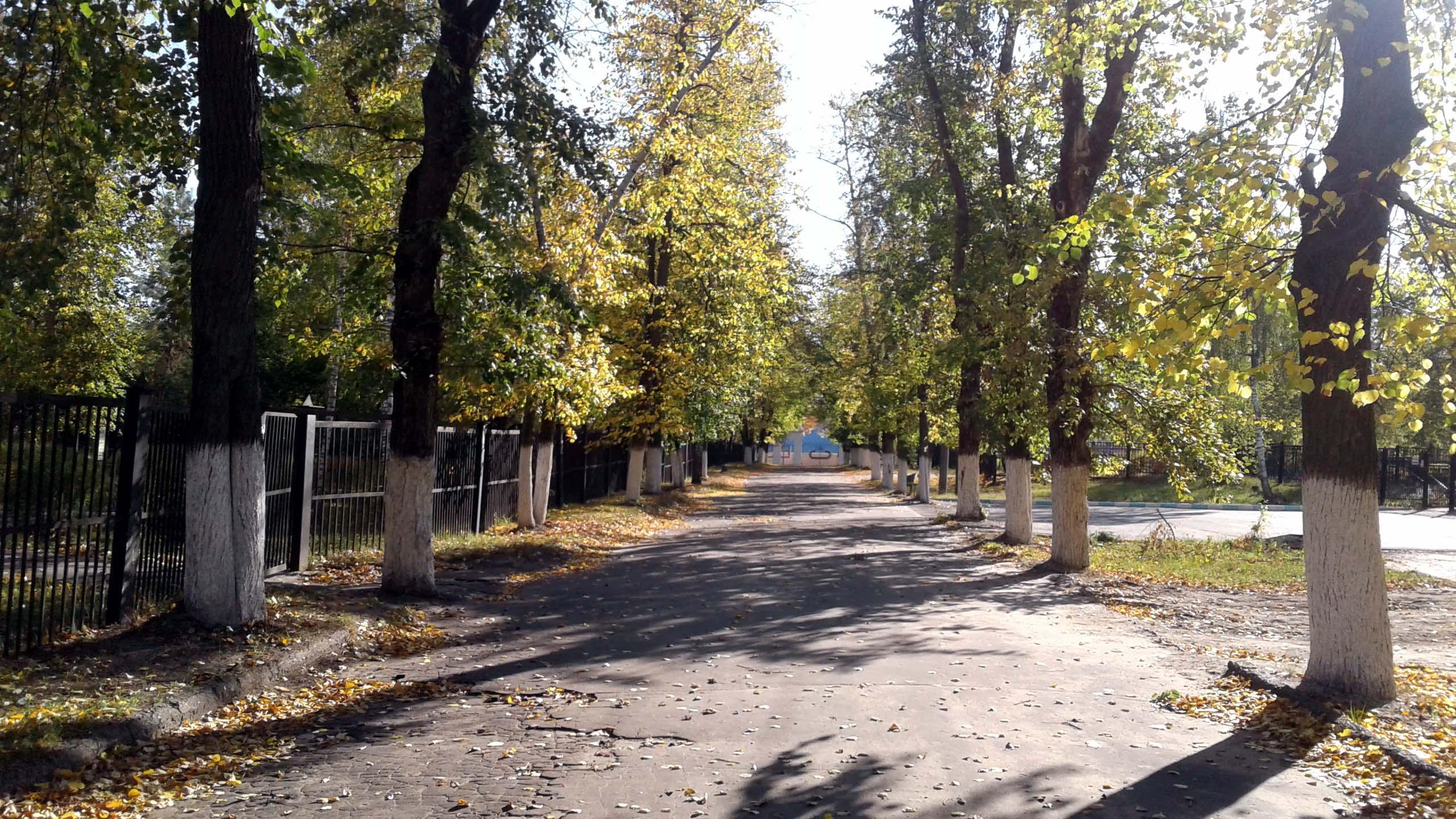 Осенняя аллея. Блиц: яркая осень