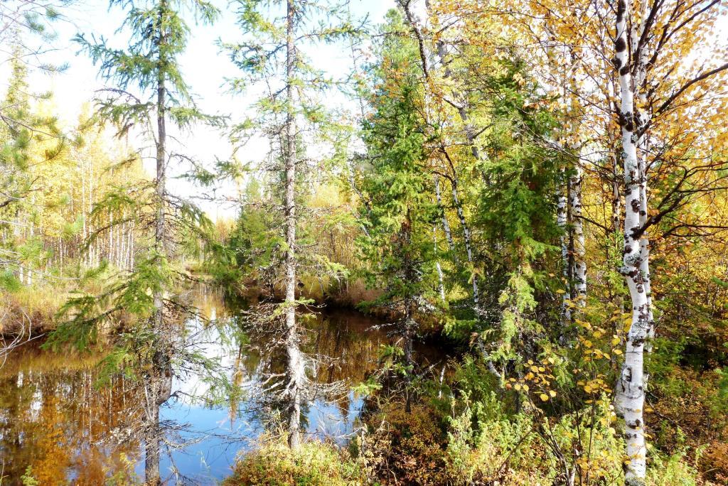 В осеннем лесу. Блиц: яркая осень