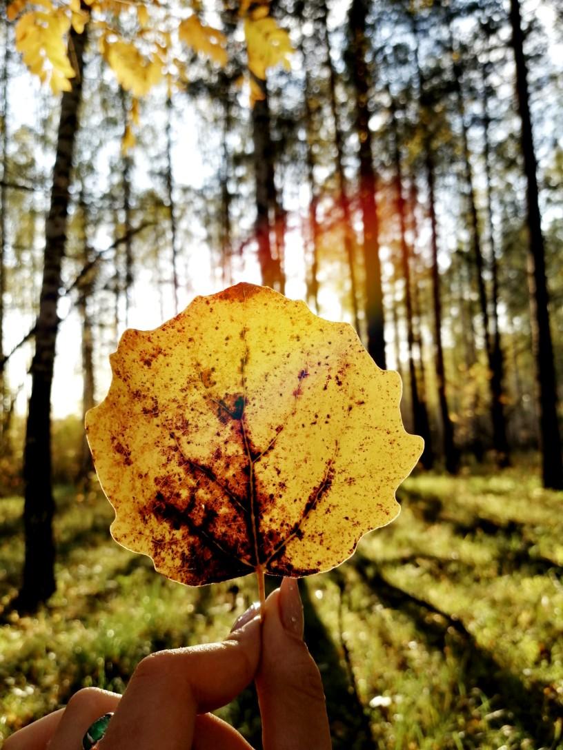 Листва. Блиц: яркая осень