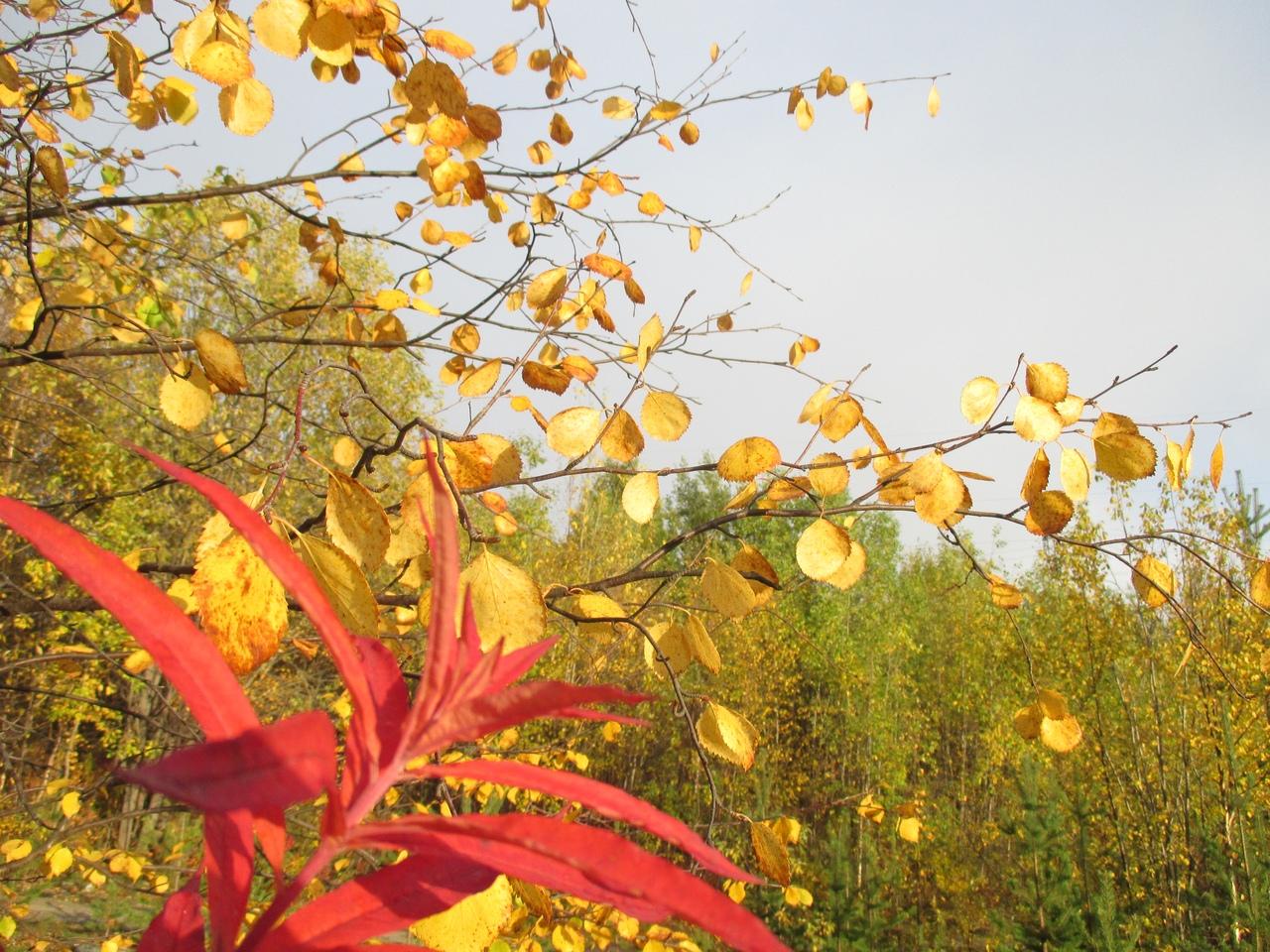 осенний лес. Блиц: яркая осень