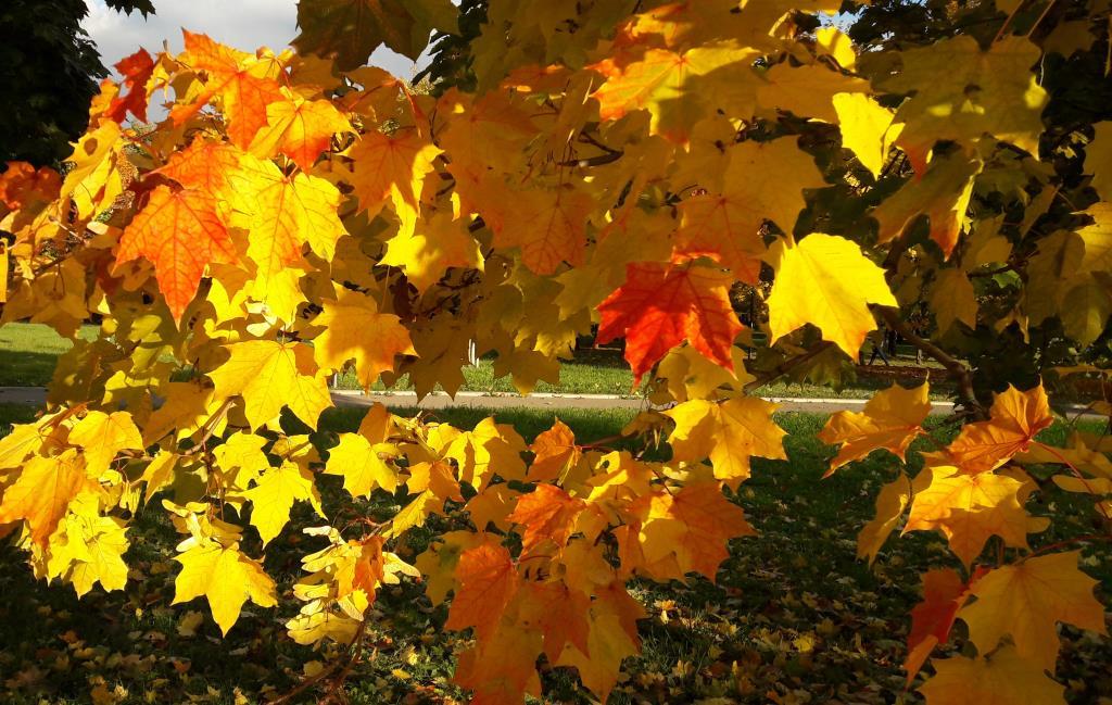 Осенняя акварель. Блиц: яркая осень