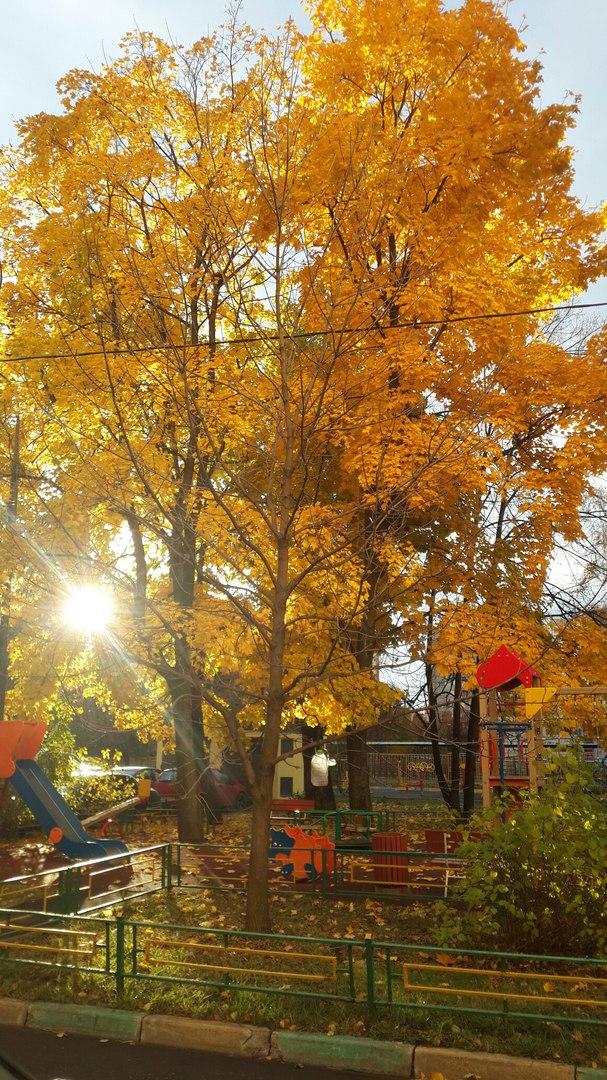 Золотая осень. Блиц: яркая осень