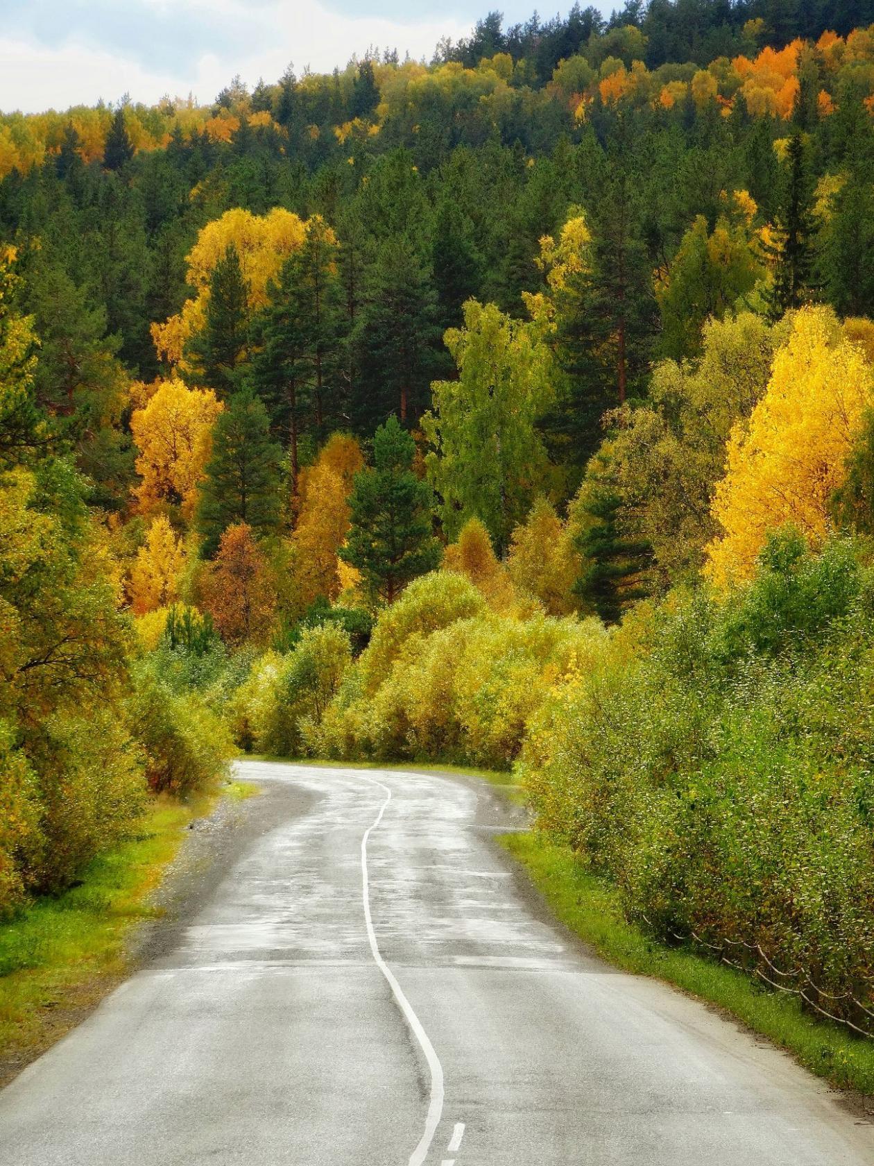 По дороге в осень . Блиц: яркая осень