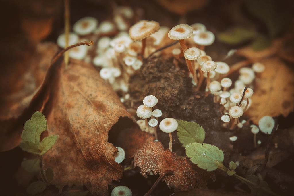 Осенние былинки. Блиц: яркая осень