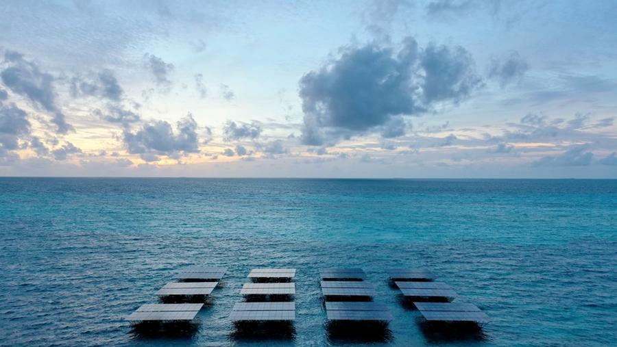 Крупнейшая в мире плавающая экосистема