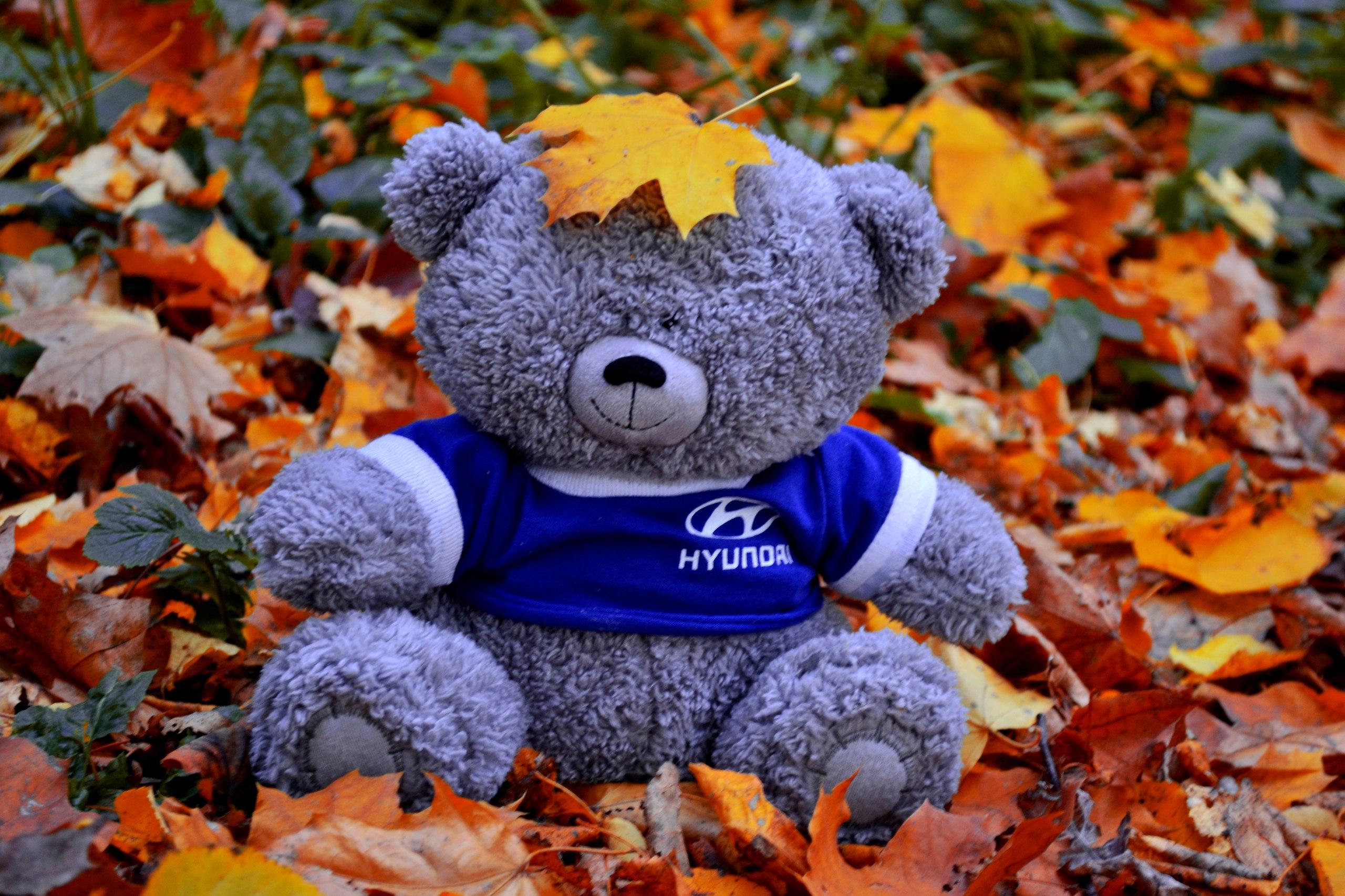Осенний мишка . Блиц: яркая осень