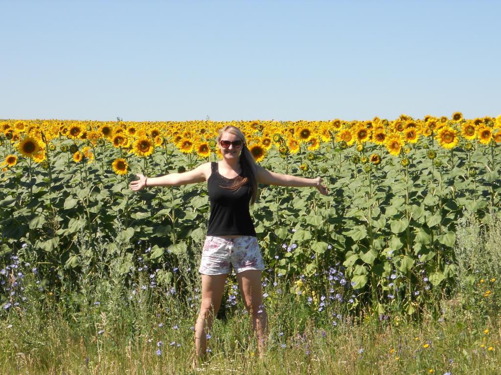 Солнечное поле!. Яркое лето