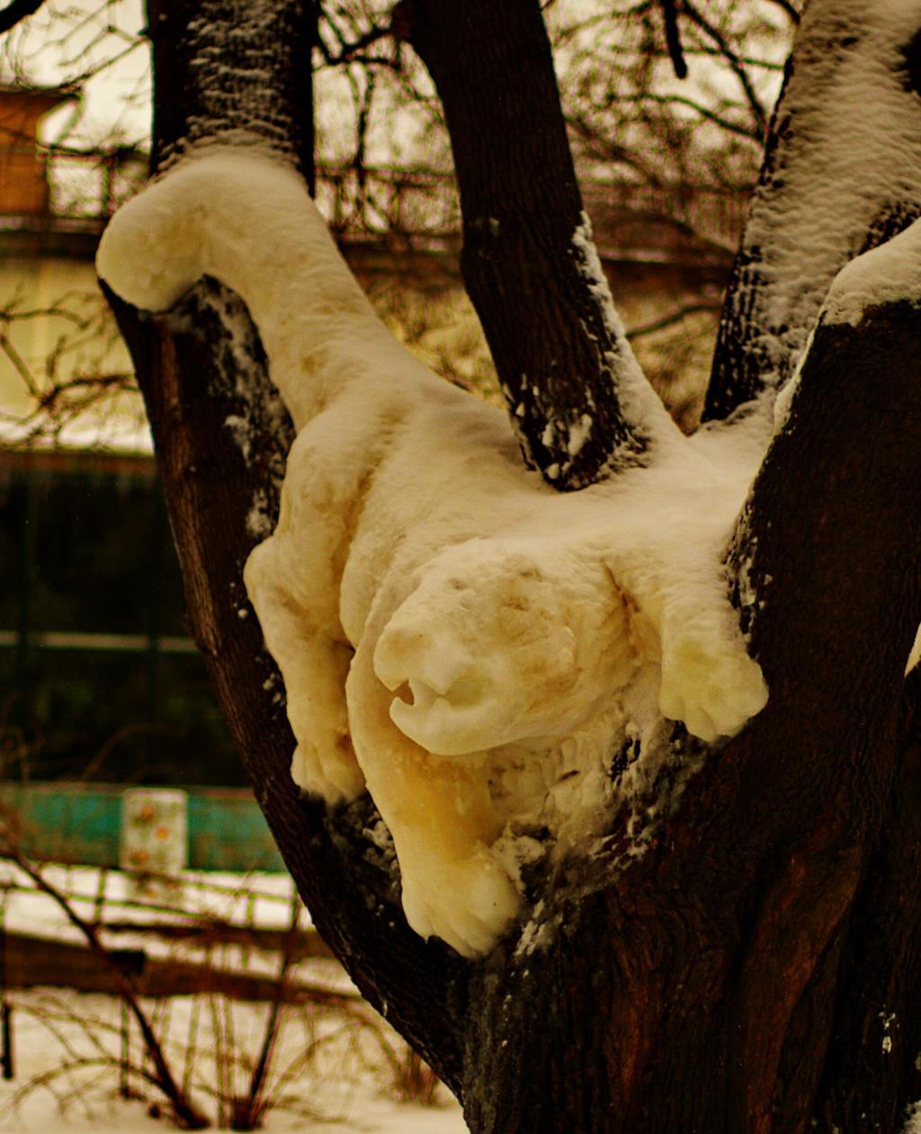 снежный барс. Блиц: фигуры из снега