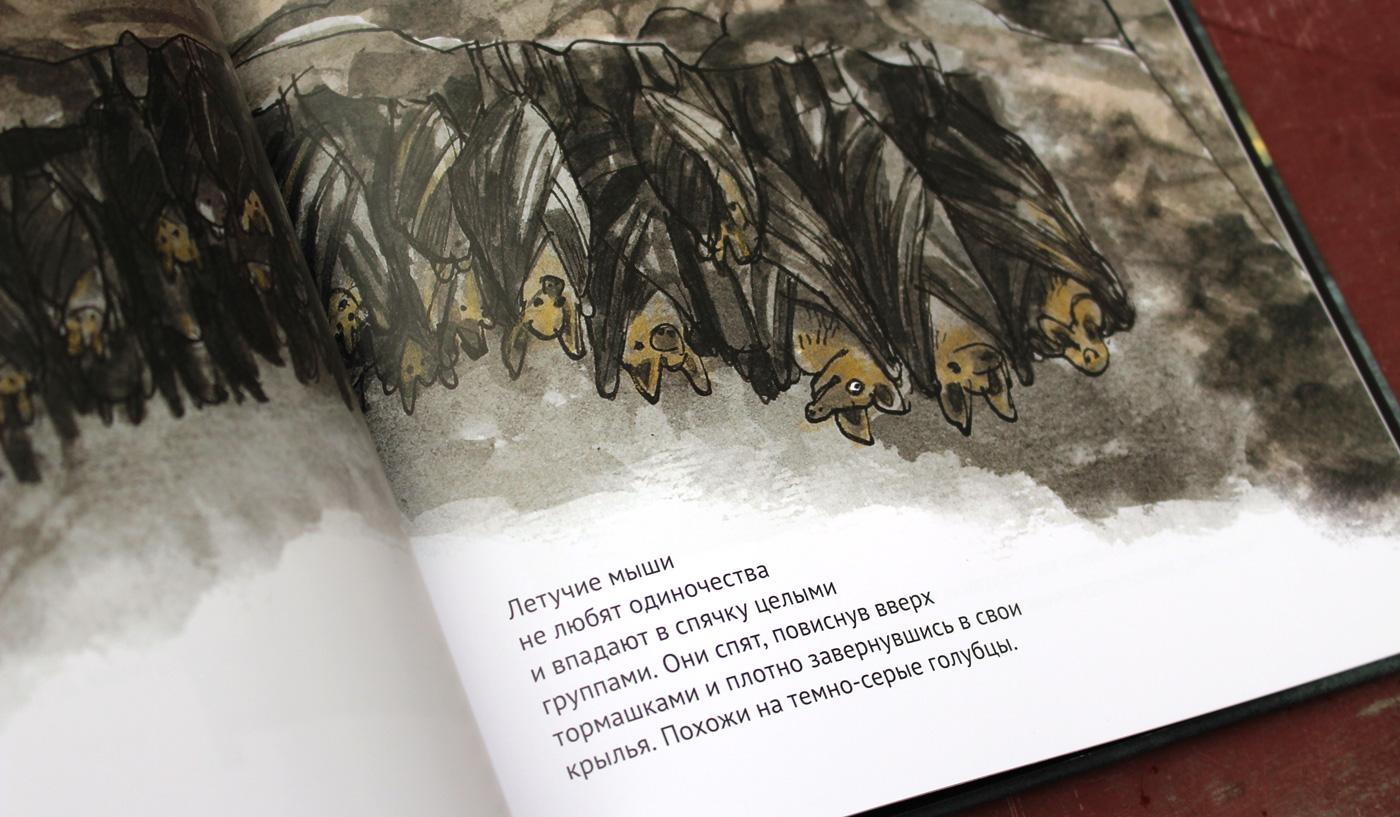 Детская книга о летучих мышах