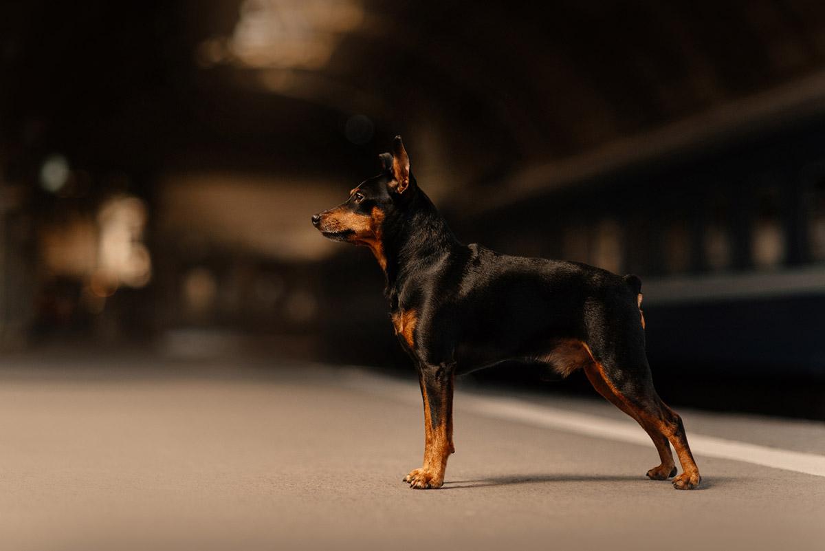собака боится темноты