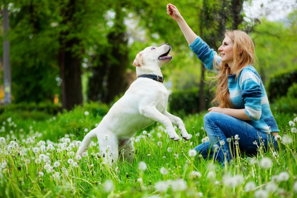 Какие растения могут быть опасными для собак