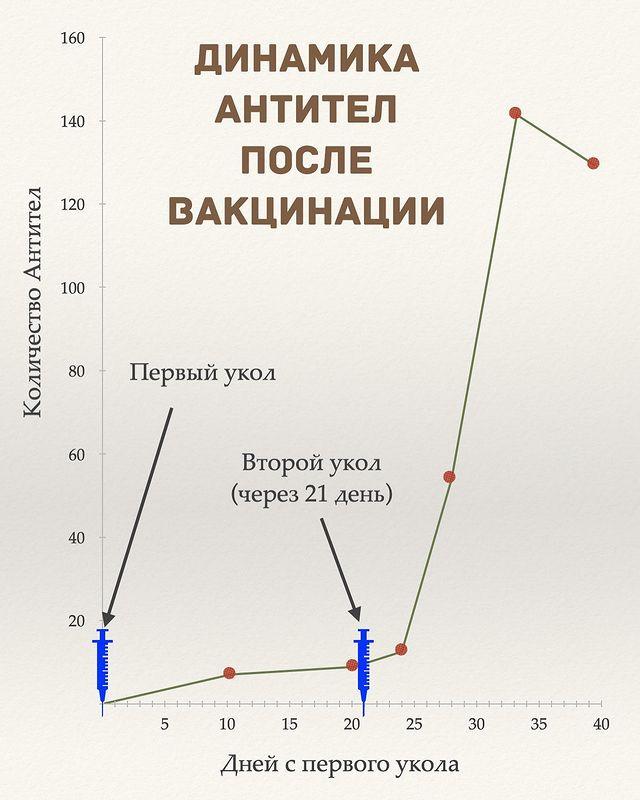 Количество антител после прививки