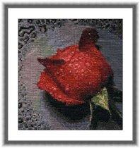 'Роза'