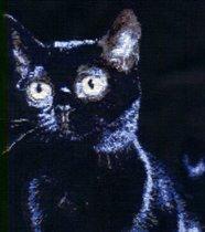 'Черная кошка'