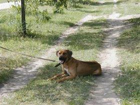 Собака Маши Б.
