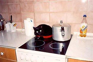Мурзик. И куда только не влезут кошки!
