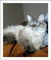 Красавец-муЩина